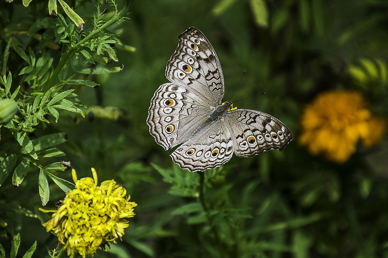 butterfly-1644189_1280